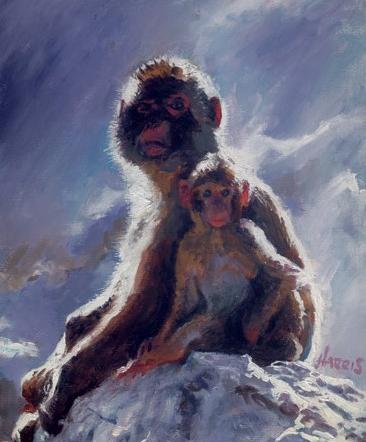 Backlit Baboon By Rolf Harris